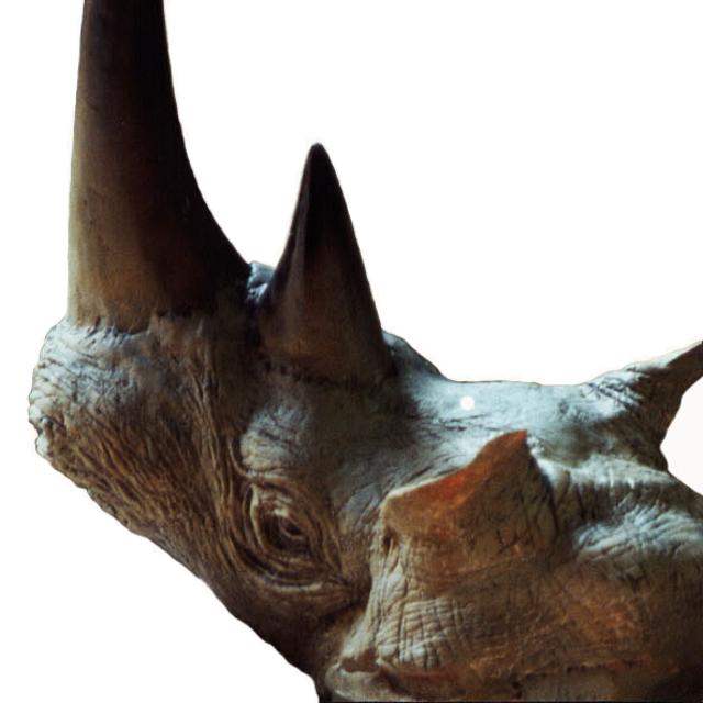 Rhinocéros - 25 cm - Aire d'Hardivilliers