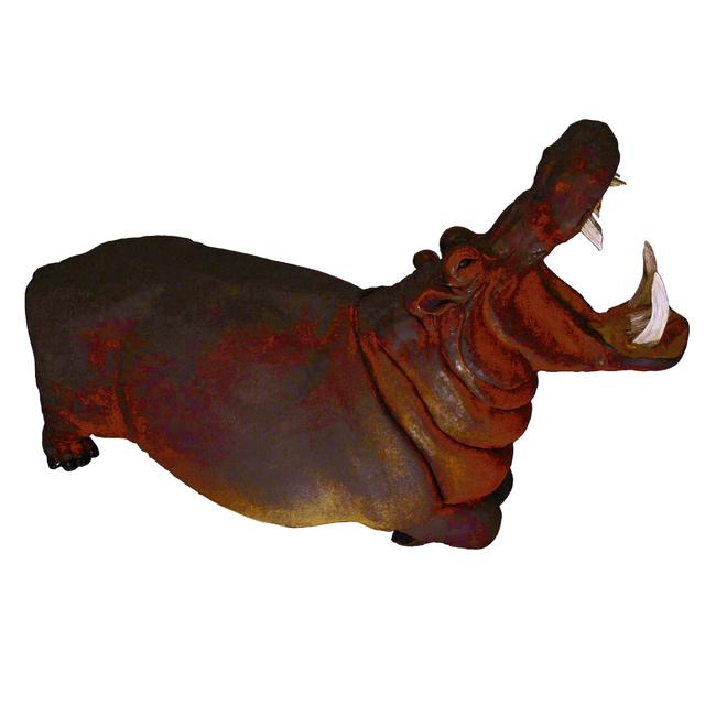 Hippopotame: 2 mètre 30 de long  Parc Wallibi